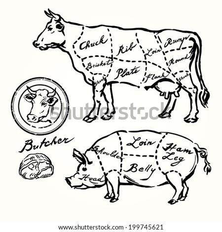 Pork Beef Cuts Hand Drawn Set Stock Vector Royalty Free 199745621