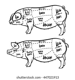 pork cuts diagram and butchery set  hand drawn pig isolated on white  background  drawing
