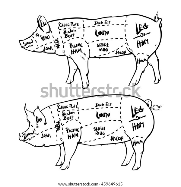 pork cuts diagram outline and butchery set  hand drawn pig isolated on  white background