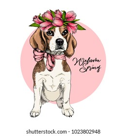 Portrait of beagle dog wearing tulip crown. Welcome spring. Hand drawn colored vector illustration. Engraved detailed art. Good for Easter greeting card, poster, banner, flyer, advertisement