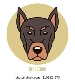 Portrait of Beauceron. Vector illustration in style of flat