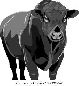 portrait of a bull