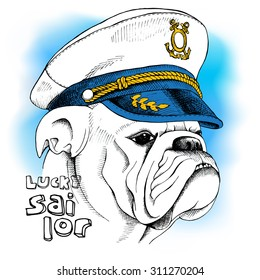 Portrait of a bulldog in sailor's cap on blue background. Vector illustration.