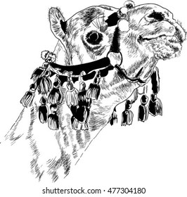 Portrait of a camel from Egypt. Black and white drawing
