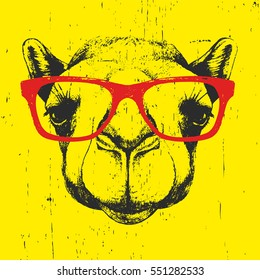 Portrait of Camel with glasses. Hand drawn illustration. Vector.