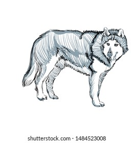The Portrait of a Cute Shaggy Dog on  White Background. Vector Illustration of a Beautiful Sketched Siberian Husky. Freehand Monochrome Drawing. Linear Sketch. Realistic Style. Animal Art for Kids