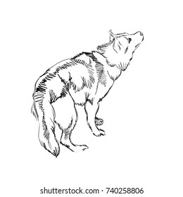 The Portrait of a Cute Shaggy Dog on  White Background. Vector Illustration of a Beautiful Sketched Siberian Husky,. Freehand Monochrome Drawing. Linear Sketch. Realistic Style. Animal Art for Kids