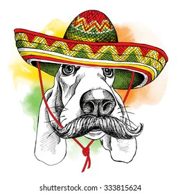 Portrait of a dog Basset Hound with mustache in Mexico sombrero. Vector illustration.