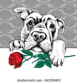 Portrait of a dog Labrador with red rose. Vector illustration.