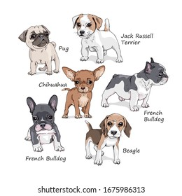 Portrait of a Dog puppies. Set of Funny Cartoon Characters. French Bulldog, Beagle, Jack Russell Terrier, Chihuahua, Pug. Hand drawn style print. Vector illustration.