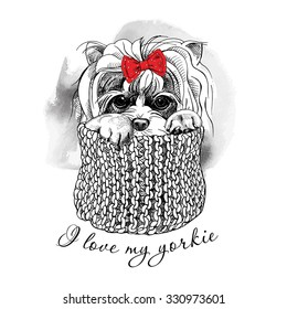 Portrait of a dog Yorkshire terrier with bow and in knitted scarf. Vector illustration.