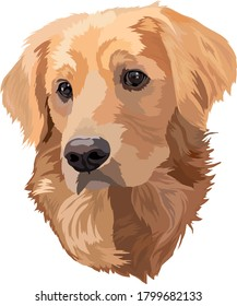Portrait of dog.Golden Labrador Retriever Head Vector Illustration.