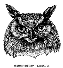 Portrait of an eagle owl. Vector hand drawn illustration for your design.