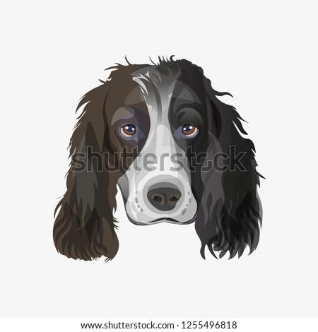 Coloriage Chien Springer.Portrait English Springer Spaniel Dog Vector Image Vectorielle De