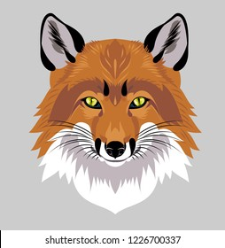 Portrait of fox