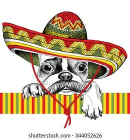 Portrait of a French Bulldog with mustache in Mexico sombrero. Vector illustration.