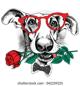 Portrait of a funny dog in glasses and tie with red rose. Vector illustration.