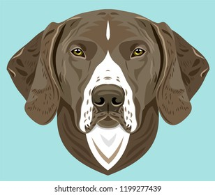 Portrait of a gun dog