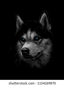 Portrait of the head of the Siberian Husky with blue eyes