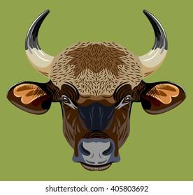 Portrait of a horned bull