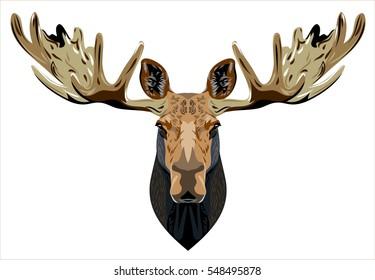 Portrait of a horned elk
