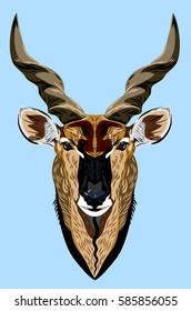 Portrait of a horned goat, antelope, gazelle