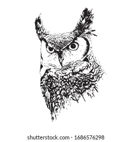 portrait of a horned owl