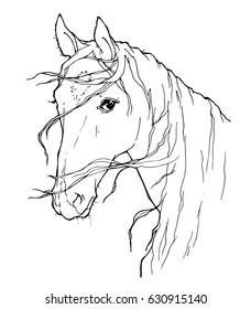 portrait of horse; decorative graphic illustration