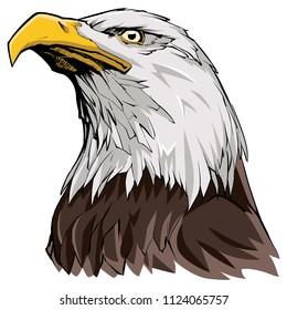 Portrait illustration of North American Bald Eagle.