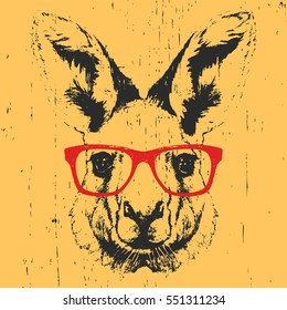 Portrait of Kangaroo with glasses. Hand drawn illustration. Vector