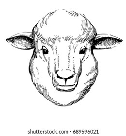 Portrait of a lamb. hand drawn vector illustration. pen and ink illustration.isolated on white background