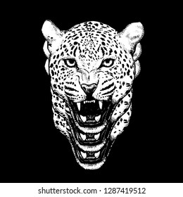 Portrait of Leopard, hand-drawn illustration, Vector ,T-shirt graphic