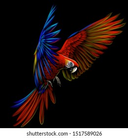 Portrait of a macaw parrot in flight. Color image of a blue-red macaw parrot on a black background.