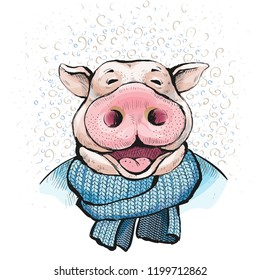 Portrait of a man pig . Ears stick out. Boar wrapped in a knitted scarf blue color. Illustration for a greeting card for new year. Watercolor style illustration
