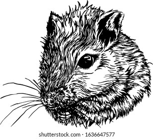Portrait of a mouse. Mongolian gerbils ( Meriones unguiculatus). A cute little rodent. Detailed close-up drawing.