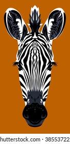 Portrait muzzle zebra