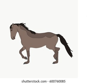 Portrait of a Namib Desert Wild Horse, hand drawn vector illustration isolated on white background