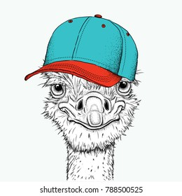 Portrait of a ostrich in a hat. Can be used for printing on T-shirts, flyers, etc. Vector illustration
