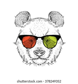 e05b17d97ad7 Portrait Panda Glasses Handdrawn Illustration Vector Stock Vector ...