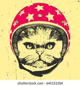 Portrait of Persian Cat with Helmet. Vector