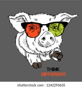 Portrait of a pig in the colored glasses. Think different. Vector illustration.