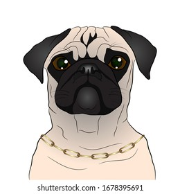 portrait of a pug dog. vector illustration on a white background.