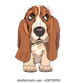 Portrait of a puppy Basset Hound. Vector illustration.
