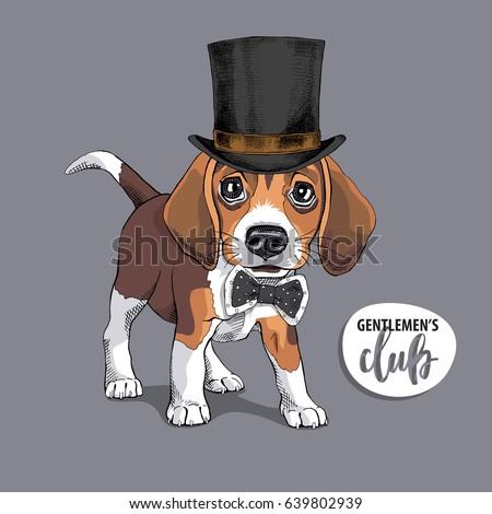3de3a6eede1 Portrait Puppy Beagle Gentleman Top Hat Stock Vector (Royalty Free ...