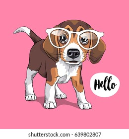 Portrait of a Puppy Beagle in a glasses on a pink background. Vector illustration.