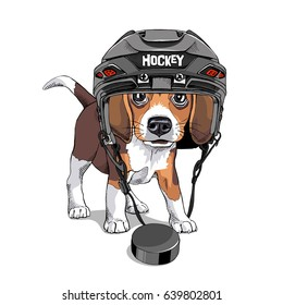 Portrait of a Puppy Beagle in a Ice Hockey Helmet and with a puck. Vector illustration.