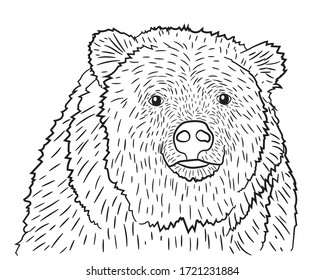 Portrait of a realistic bear in isolate on a white background. Vector illustration.