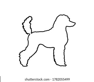 Portrait of Royal Poodle vector line contour silhouette illustration isolated. French black poodle walking. Beware of dog sign. Dog show exhibition.