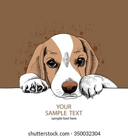 Portrait of a sad puppy Beagle on brown background. Vector illustration.