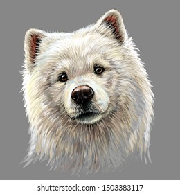 Portrait of a Samoyed dog in artistic, watercolor style on a gray background.